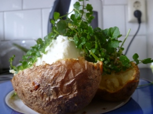 Grden weed salad, Jacket potato and cream cheese