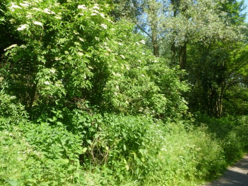 Edible hedgerow