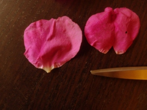 Rose petals with & without claw