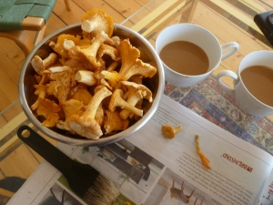 Cleaned Chanterelles