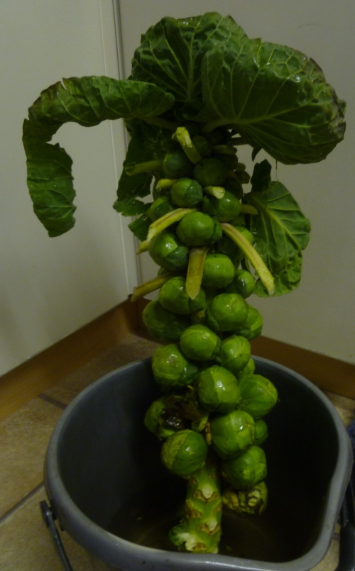 A Stalk of Sprouts