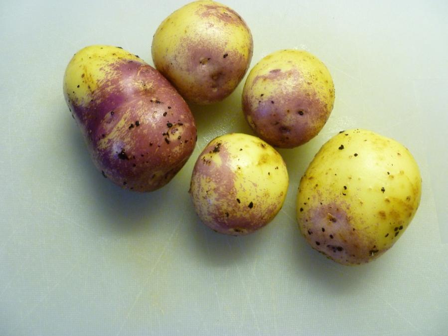 Purple Eye Potatoes