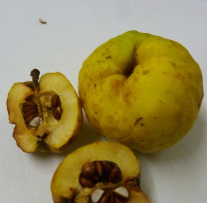 Japanese quince , halved